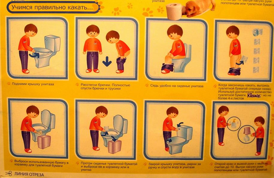 водных растений как списывается туалетная бумага в детском саду занятий: