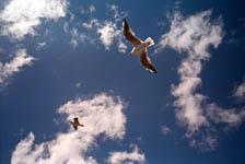 Наглые птицы