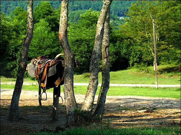 в ожидании конной прогулки