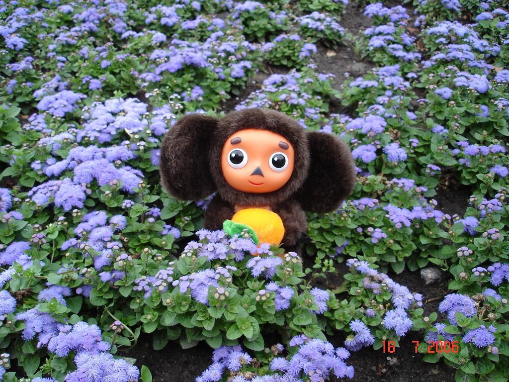 картинка чебурашки с цветком она это лишь