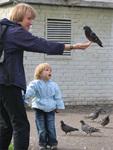 голубь на ладони