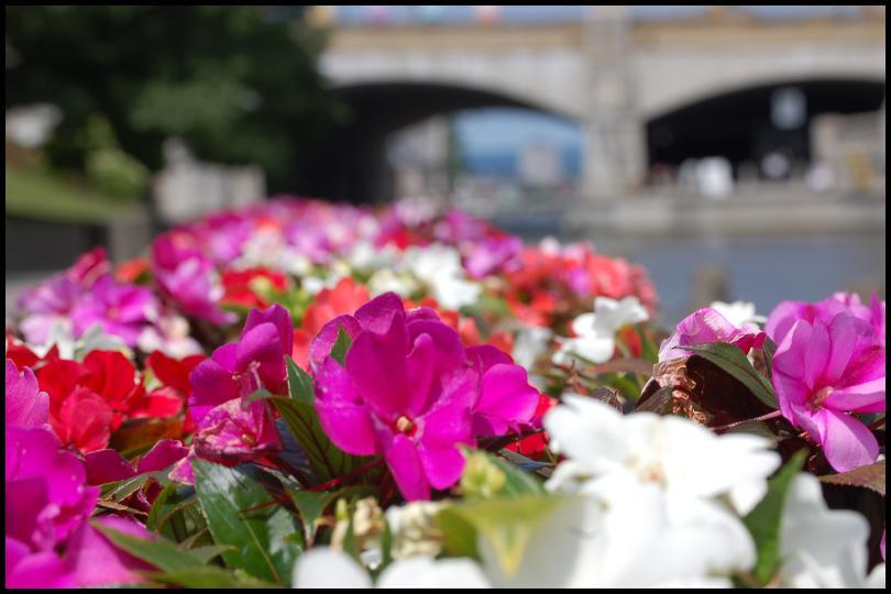 Цветы Ридо канала by Magon