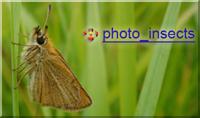 Макрофотографирование насекомых