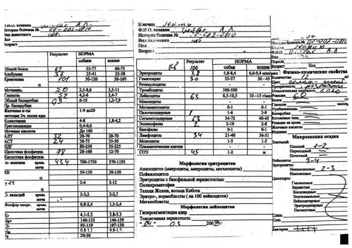 Может биохимический анализ крови показать лямблиоз Справка 070 у Сухаревская