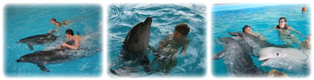 Плавание в бассейне с дельфинами