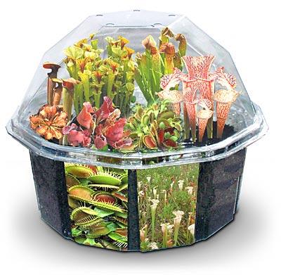 Плошка с хищными растениями