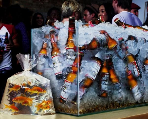 Аквариум с пивом