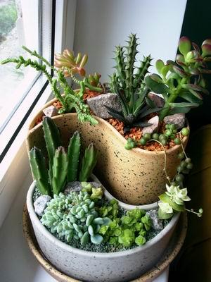 Симпатичные кактусы