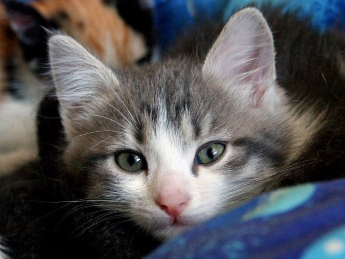 Картинки хочу котенка