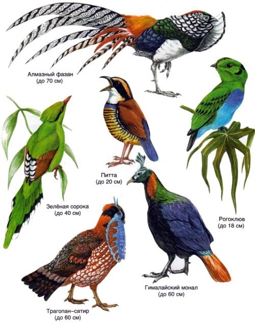 картинки с названиями птиц австралии информативный вид