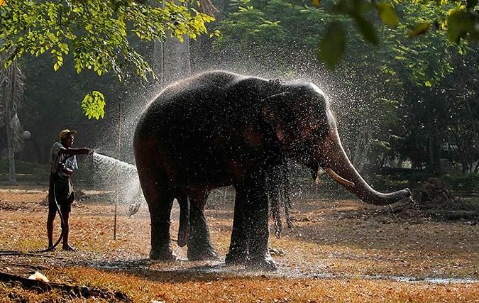 помой слона