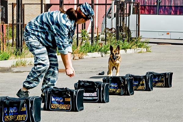 Картинки по запросу Собака ищет взрывчатку