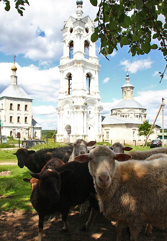 Вівці на погості