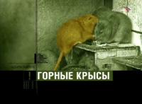 Честный детектив - Горные крысы (2008)
