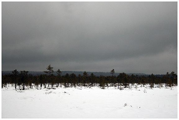 Березинский биосферный заповедник. рожнянское болото. photo by kazakov maksim
