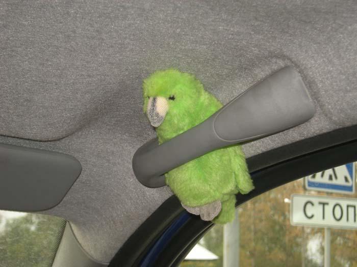Плюс попугай
