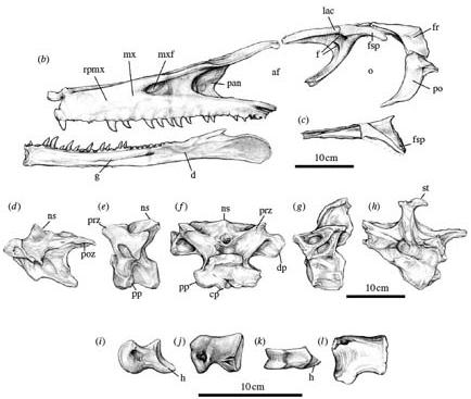 http://www.ljplus.ru/img4/d/o/doctor_insulin/austroraptor_bones.jpg