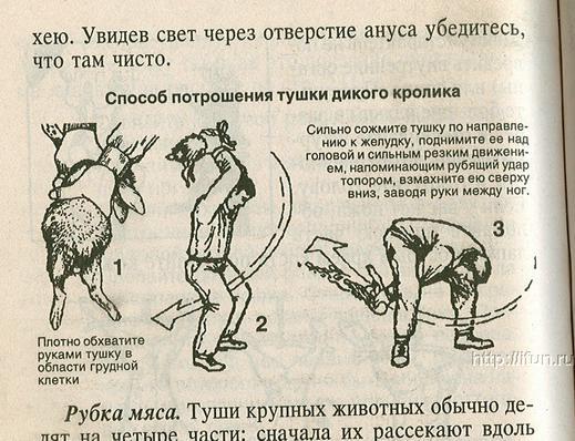 http://www.ljplus.ru/img4/e/_/e_d_k/potroshenie.jpg