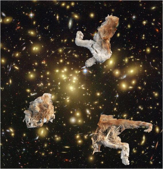 Гниющий космос