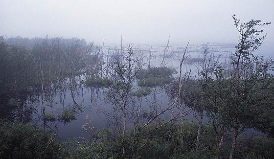 Петербург болото