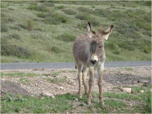 кыргызский ослек