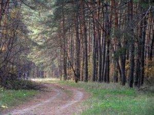 лес напротив части