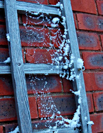 Снег на паутине!