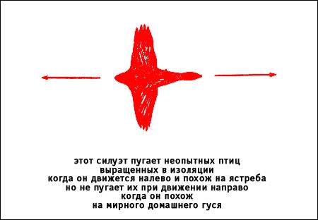 20.59 КБ