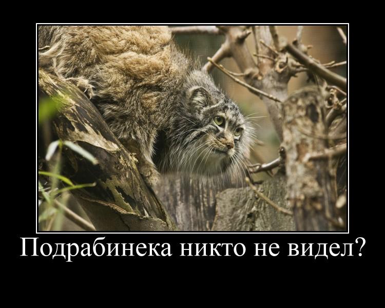 http://www.ljplus.ru/img4/k/o/<lkommari_2/motiv.jpg