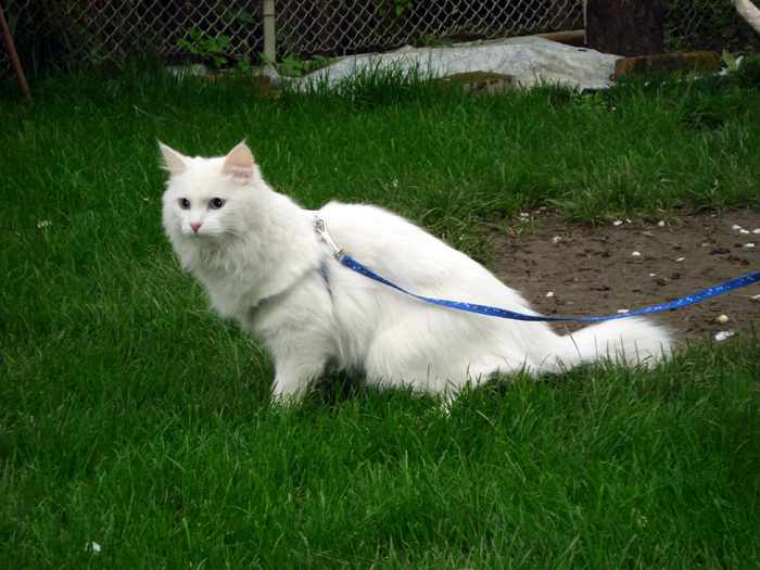 Bjork on a walk