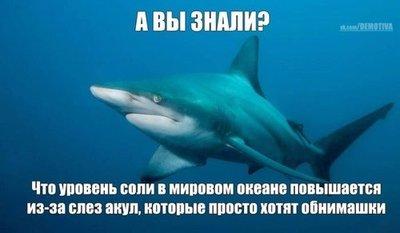 16.87 КБ
