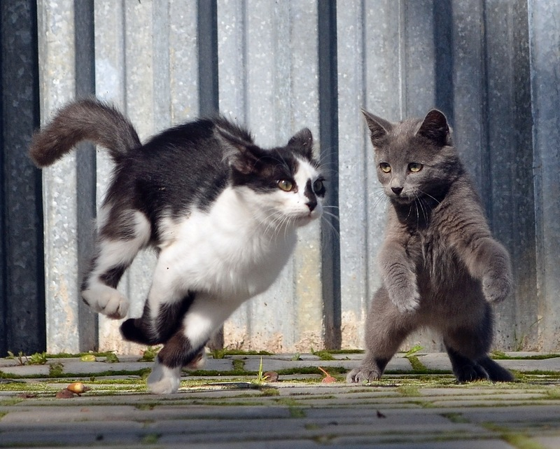 соединительную жизнь одной кошки в картинках люди