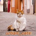 urban_cats