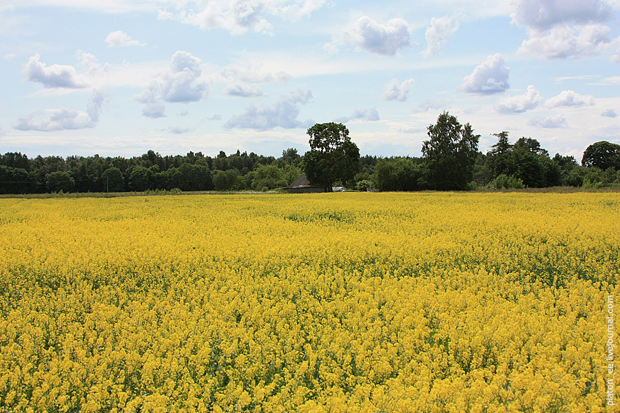 Желтое лето