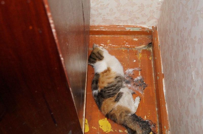Если кошка умирает в квартире
