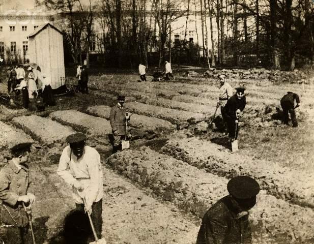 Алексей - Николай II с остальными Романовыми работают в саду в Царском Селе, 1917 г.
