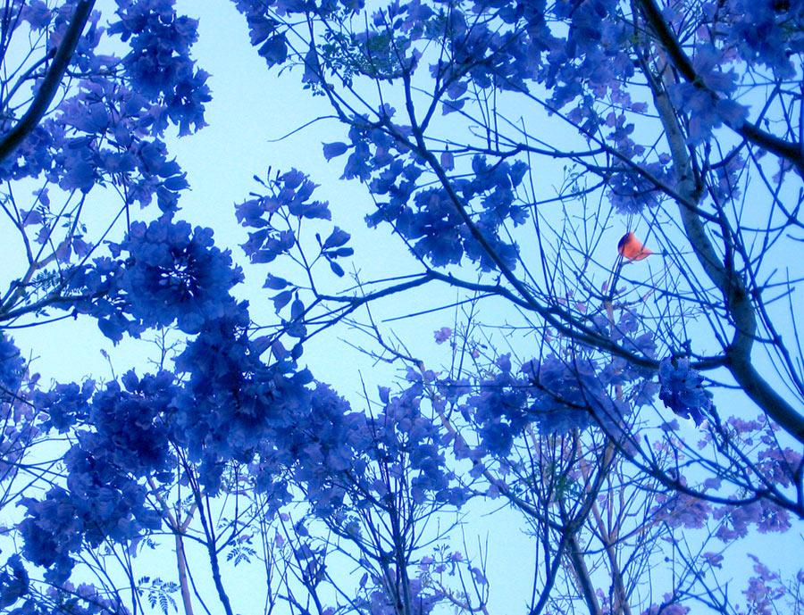 Канарские цветочки
