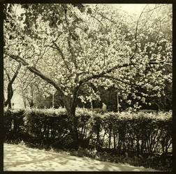 Яблоневая аллея