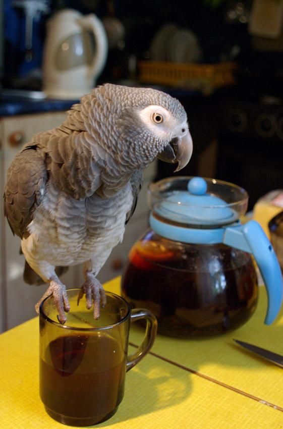 Это - МОЙ чай!!!